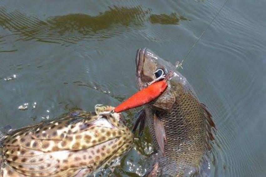 عالم الصيد ٠٠٠ ( في الغردقه الأسماك والطعوم والمعدات )