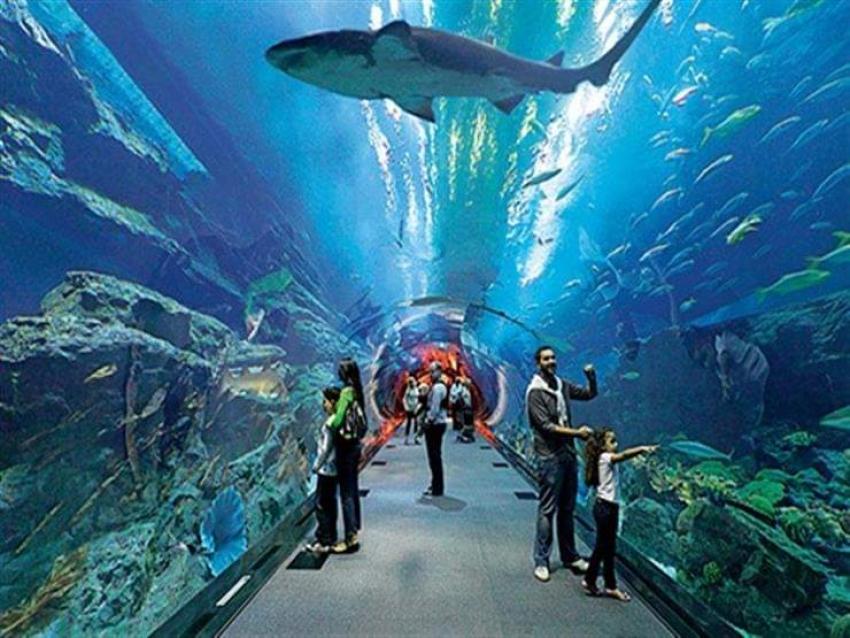 متحف الاحياء المائية بالغردقة