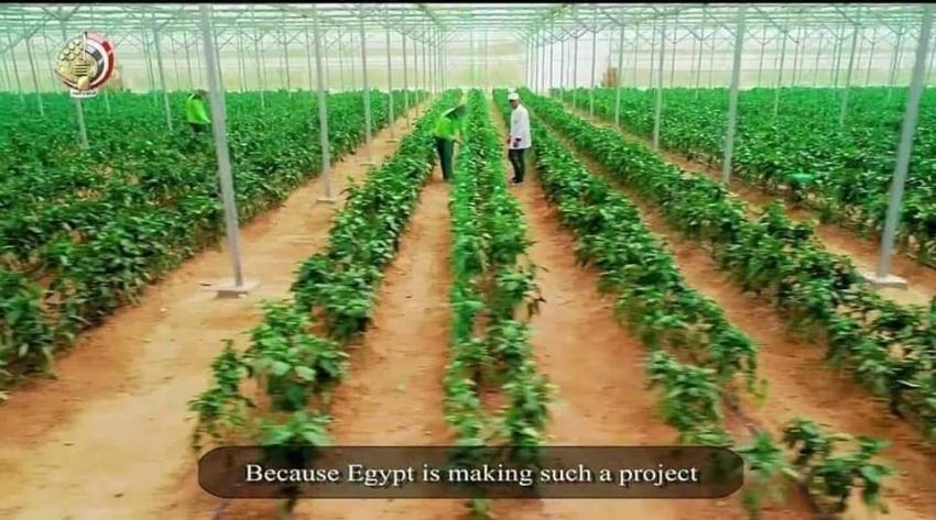 ثاني  أضخم مشروع صوب زراعية فى العالم في مصر